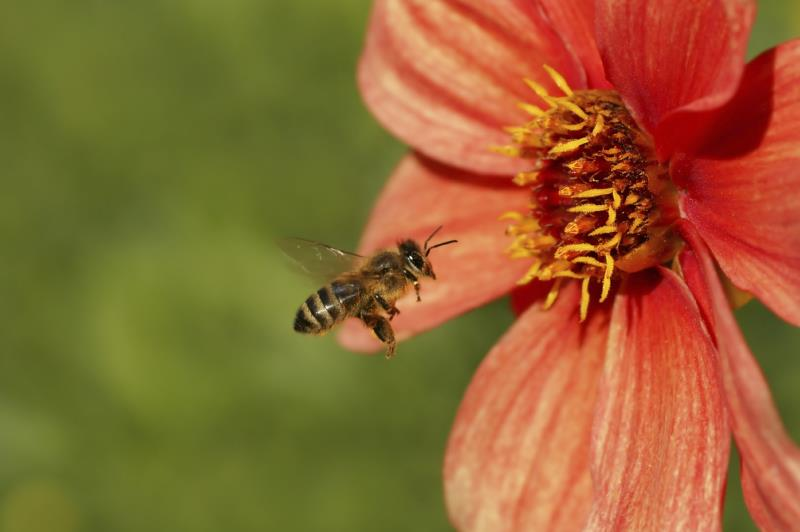 Create a bee-friendly garden
