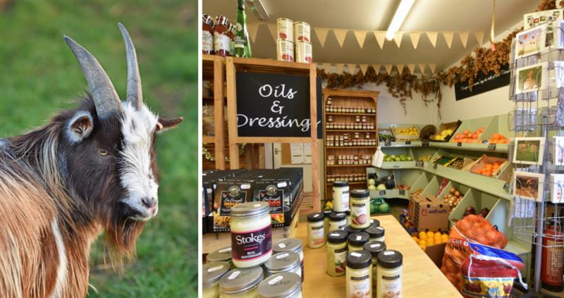 Diversifying your smallholding