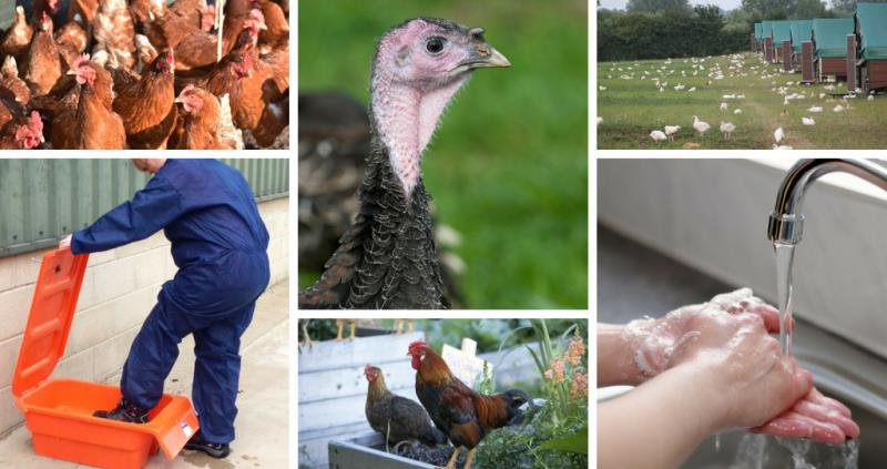 Poultry farmers and pet bird keepers urged to prepare for winter Avian Flu threat