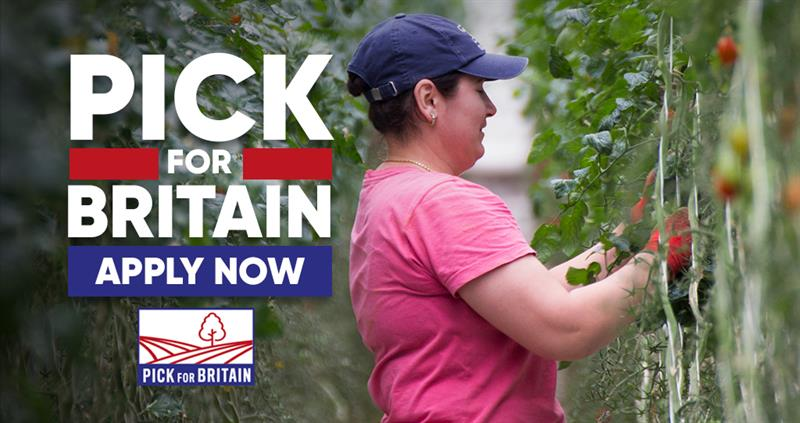 Learn more about the 'Pick For Britain' campaign